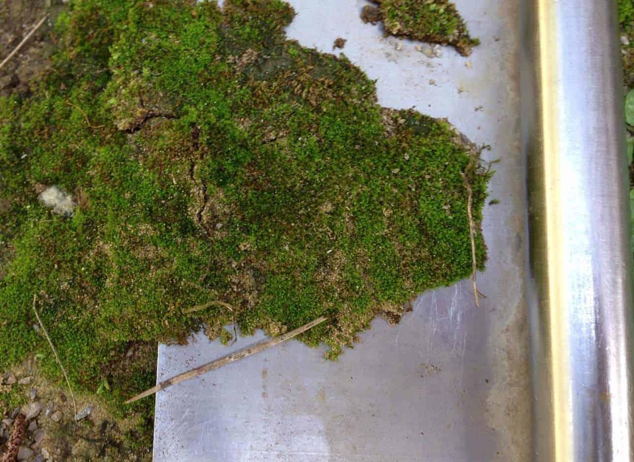 Moss Mats Growing Moss In Your Fairy Garden Fairy Gardening Australia