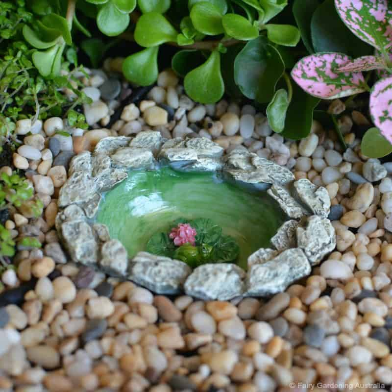 micro frog pond