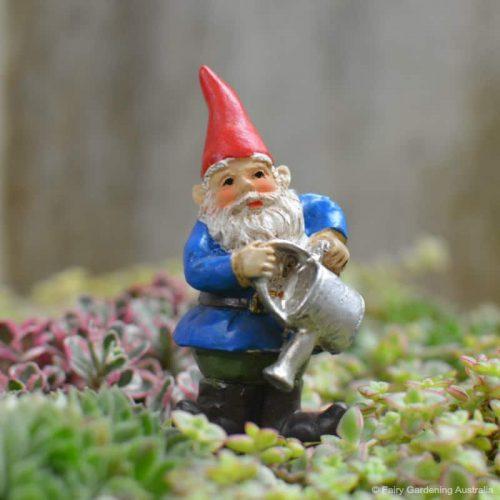 """Brolan"" Gnome"