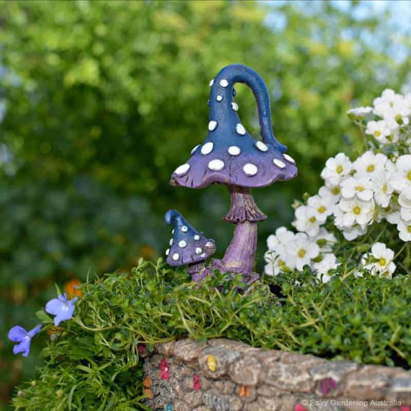 mystic mushroom_blue_fga