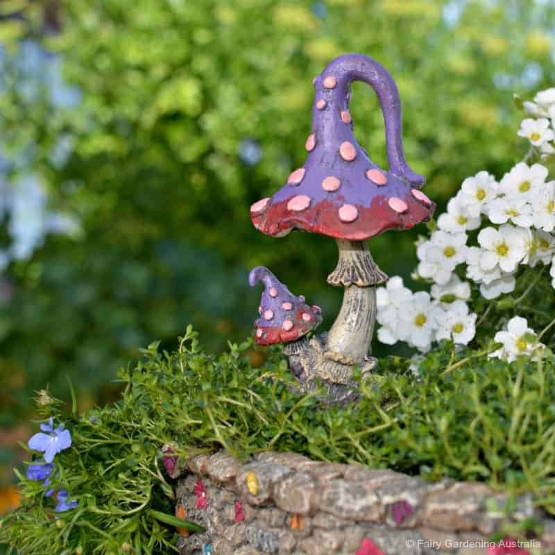 mystic mushroom_red_fga
