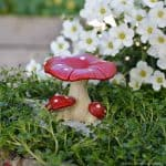 red toadstool_flat_fga