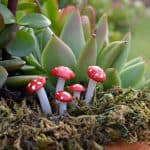 Micro Fly Agaric Mushrooms – Red