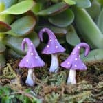 Micro Curl Top Mushrooms – Purple
