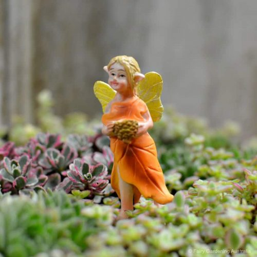 Fairy Pin Oak