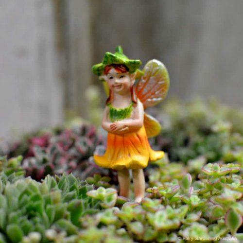 Fairy Pumpkin Blossom
