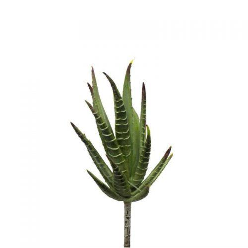 Aloe Plant 10cm
