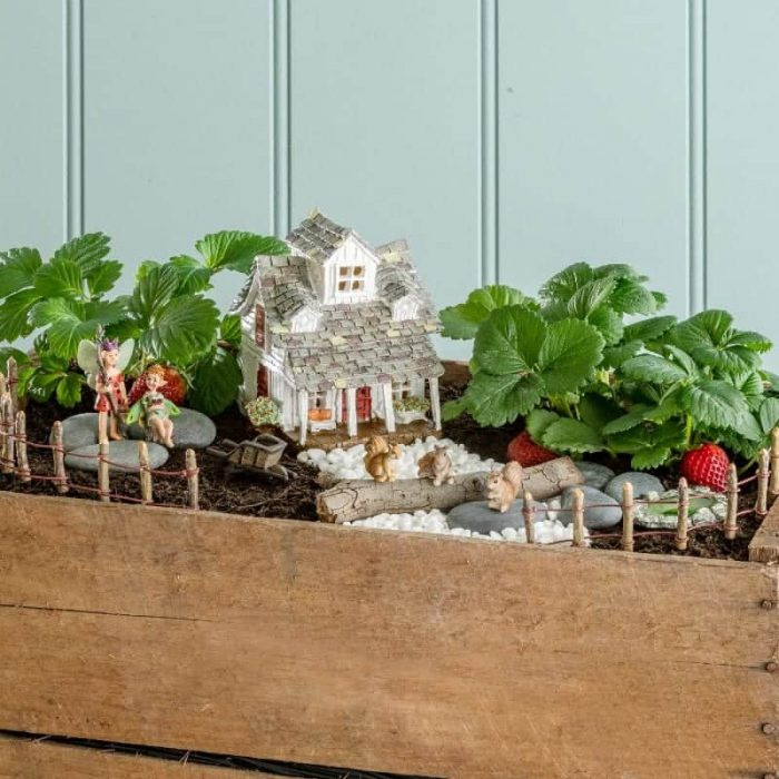 Fiddlehead Fairy Garden Kit