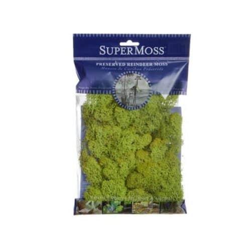 Reindeer Moss – Chartreuse