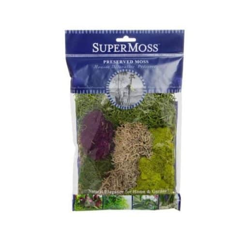 Reindeer Moss – Mixed