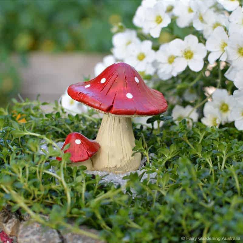 red mushroom_round_fga