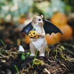 Squirrel with Bat Wings
