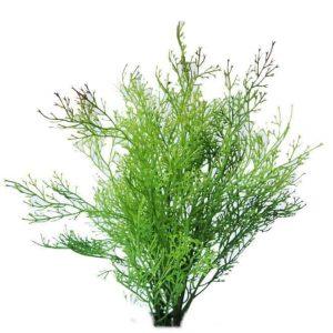 Coral Fern 40cm