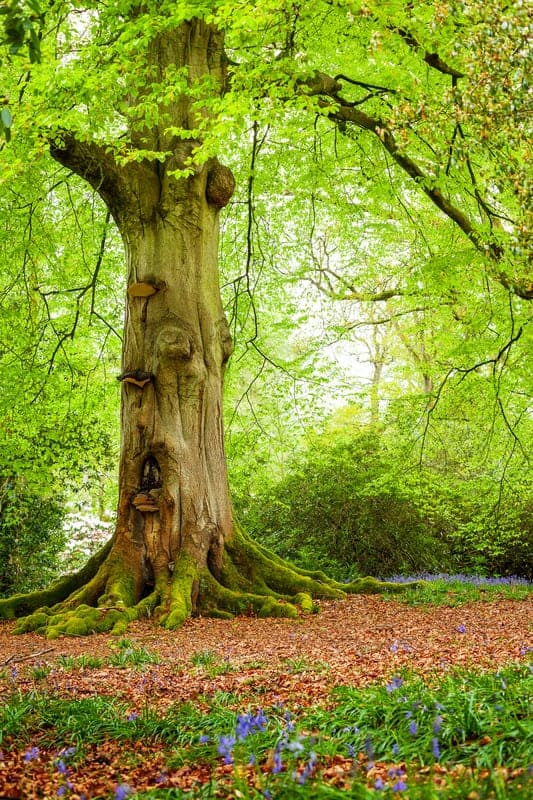 learn how to find forest fairies, learning centre for fairy gardeners