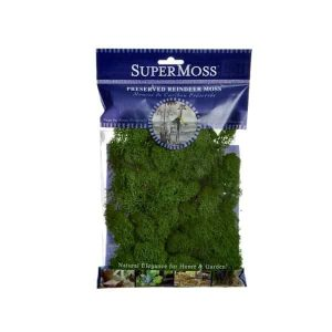 Reindeer Moss – Forest Green