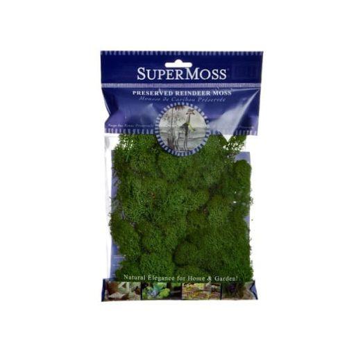Reindeer Moss – Forest Green