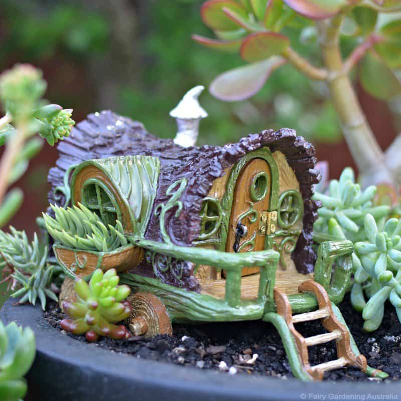 Fiddlehead Fairy Garden
