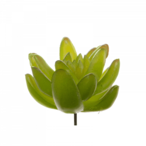 Light Green Succulent 7cm