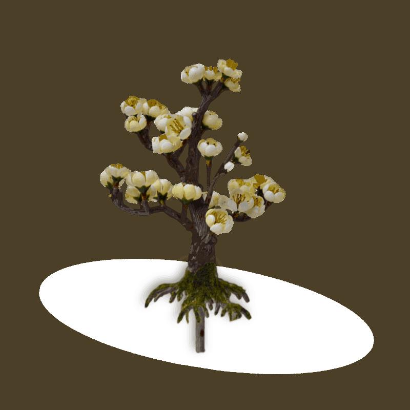 Bonsai Blossom_1
