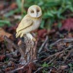 barn owl on a stump, figurine for fairy gardens