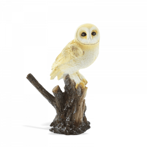 Barn Owl on a Stump