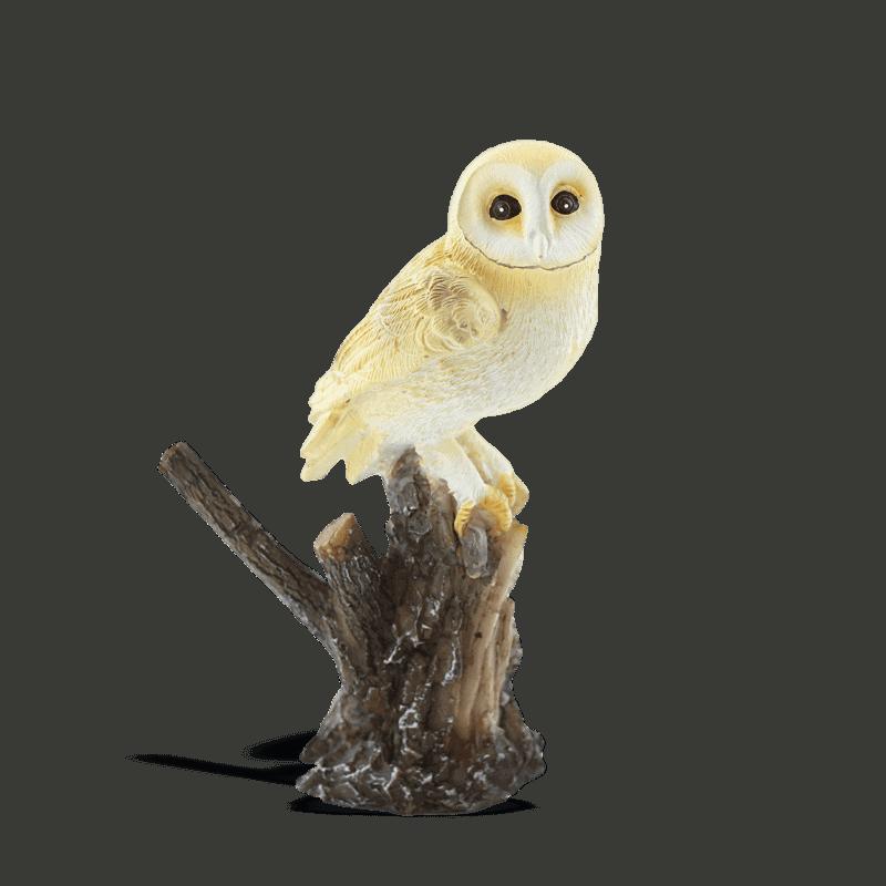 barn owl on a stump