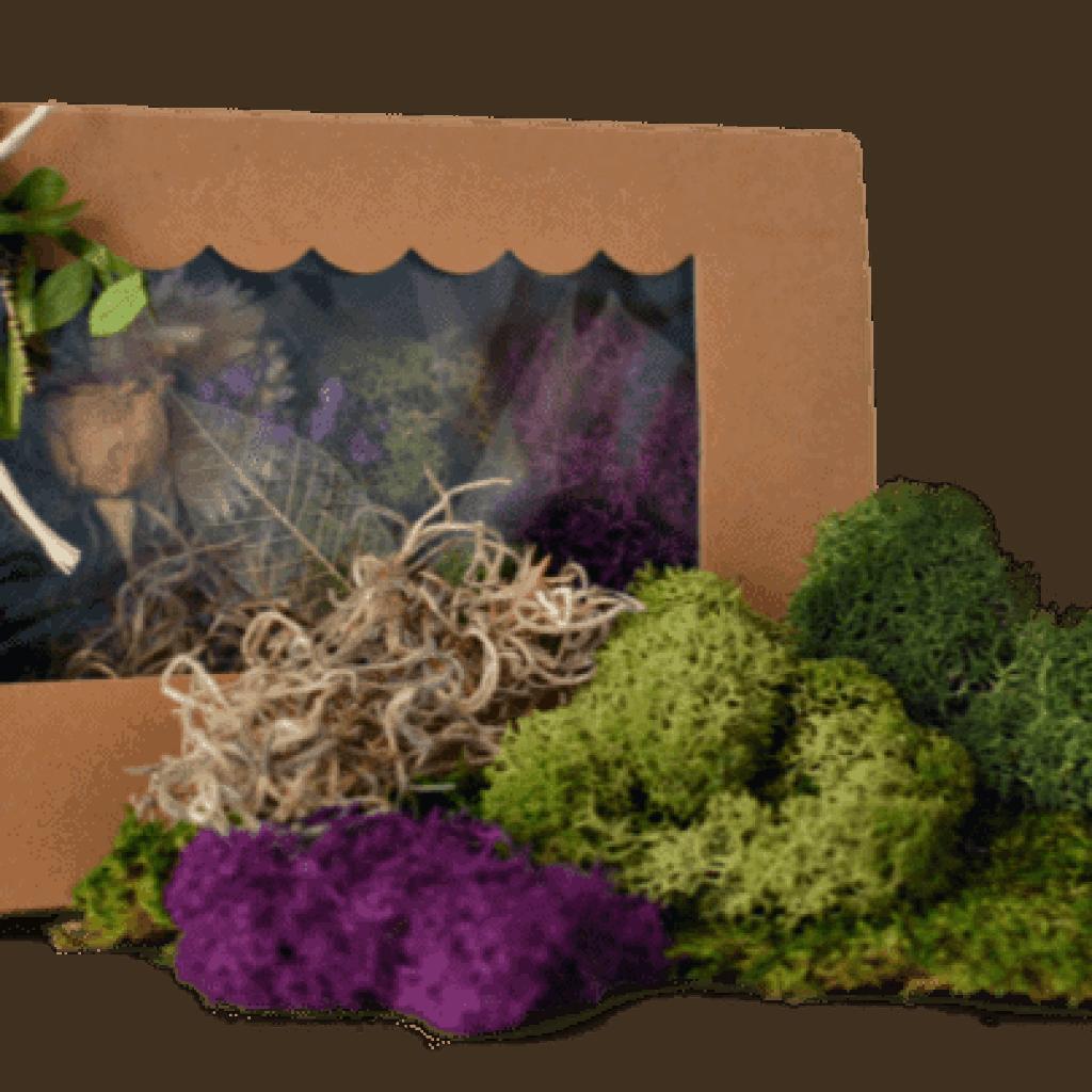 Moss Kit by Fairy Gardening Australia
