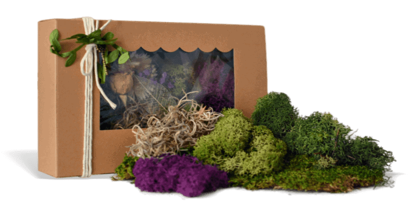 Moss Kit by Fairy Gardening Australia