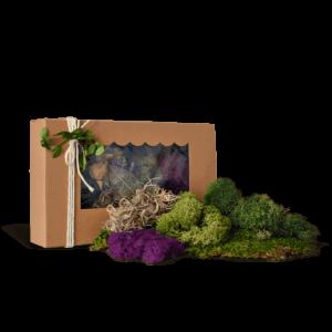 Fairy Garden Moss Kit