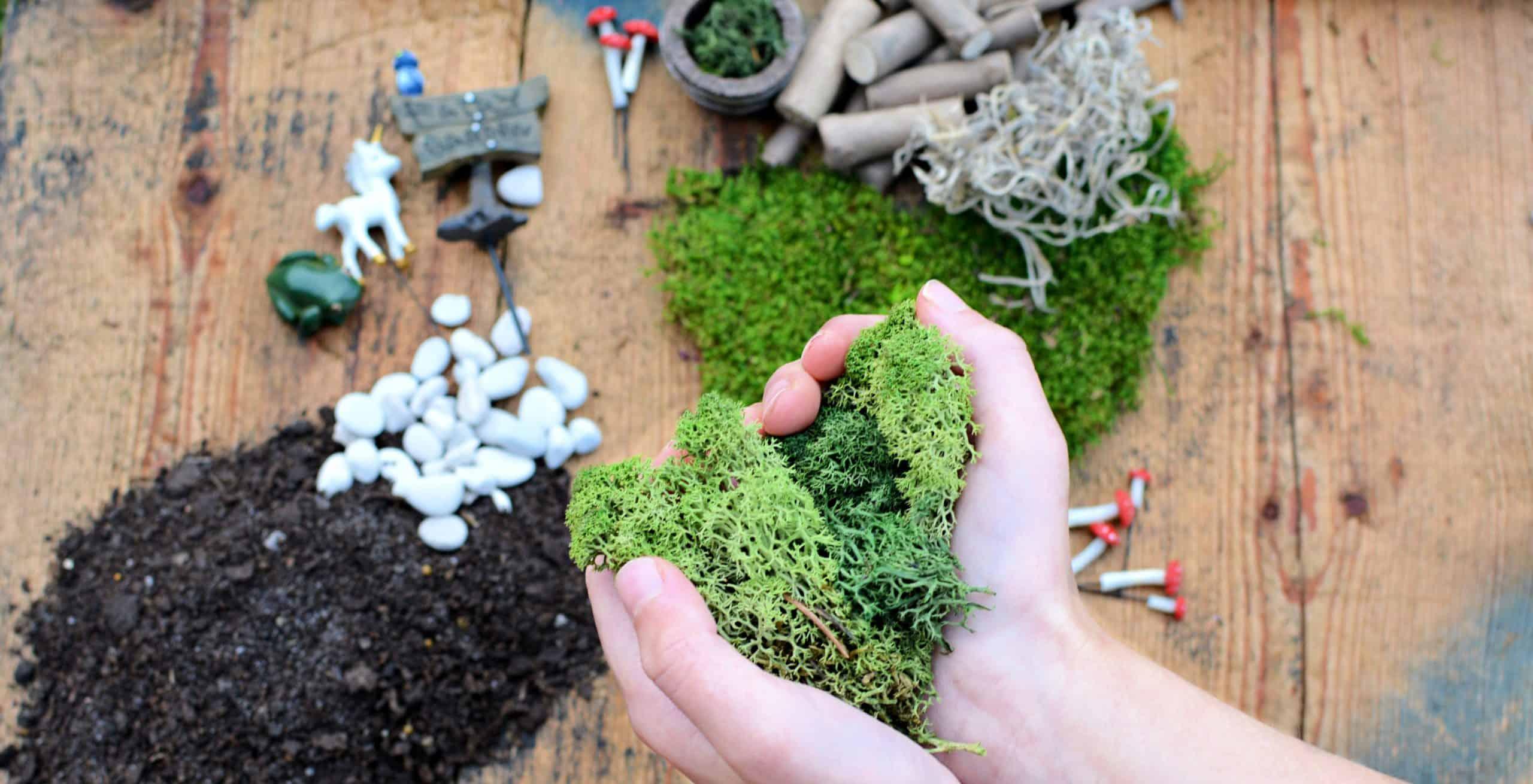 moss for fairy gardens