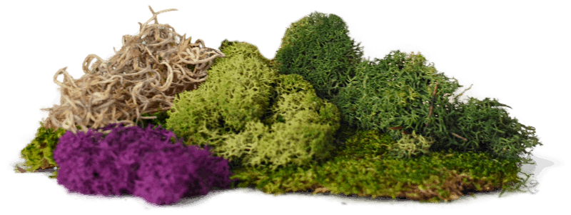 mixed moss for fairy gardens