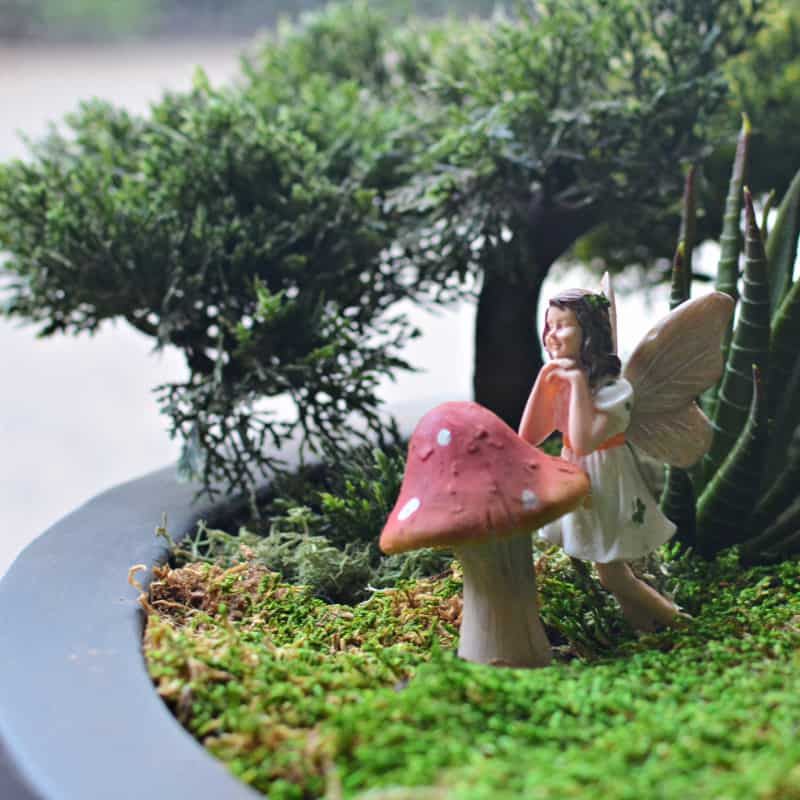 fairy garden with sheet moss