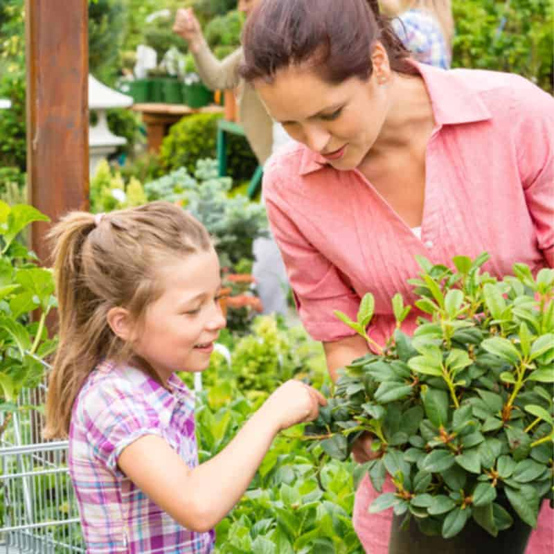 choosing fairy garden plants