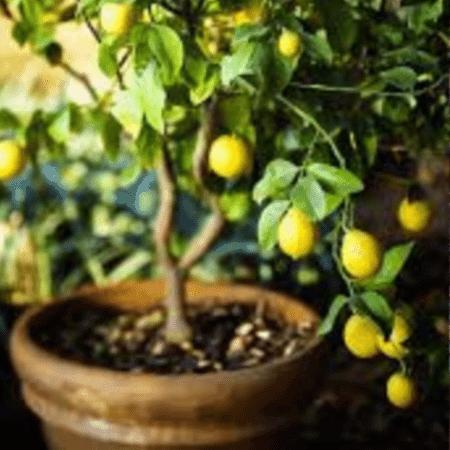 best plants for your fairy garden
