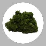 Forest Green Reindeer Moss