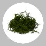 Green Spanish Moss