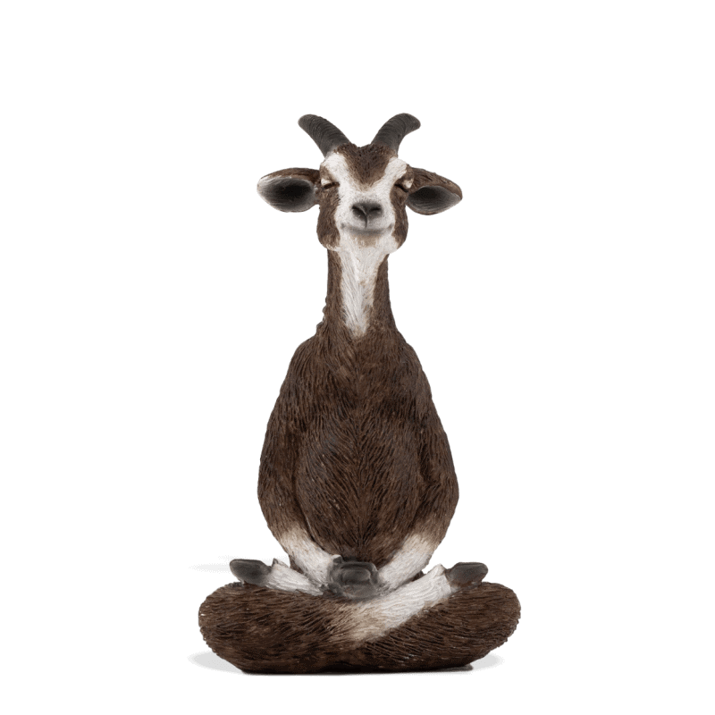 Meditating Goat