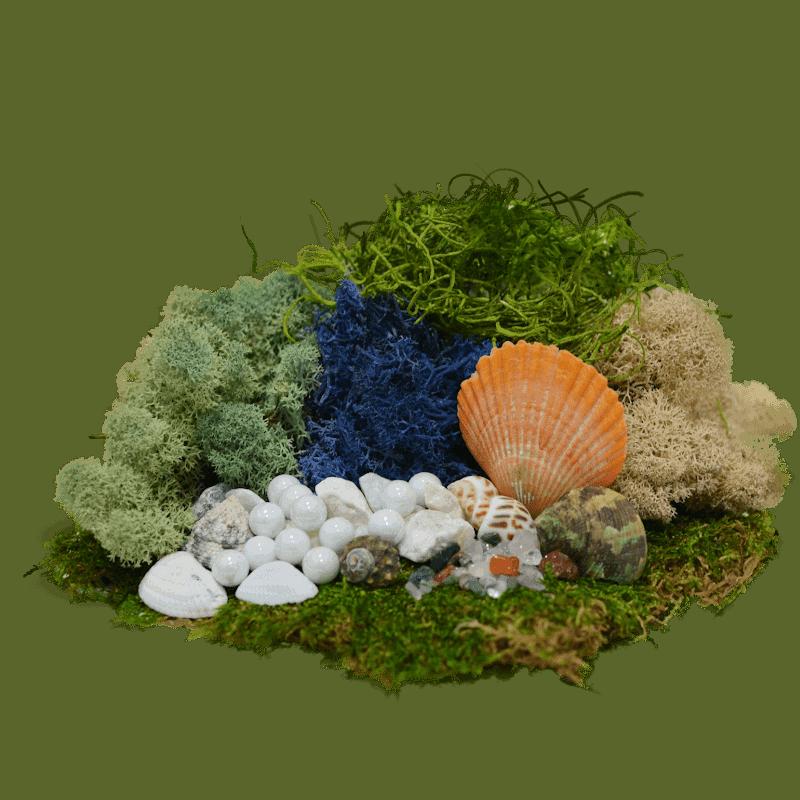 The Mermaid's Moss Kit
