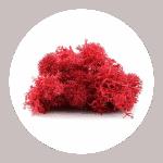 Red Reindeer Moss