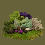 Secret Garden Moss Kit