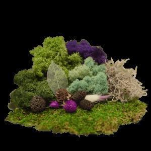 Fairy Garden Moss