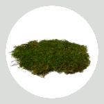 Sheet Moss