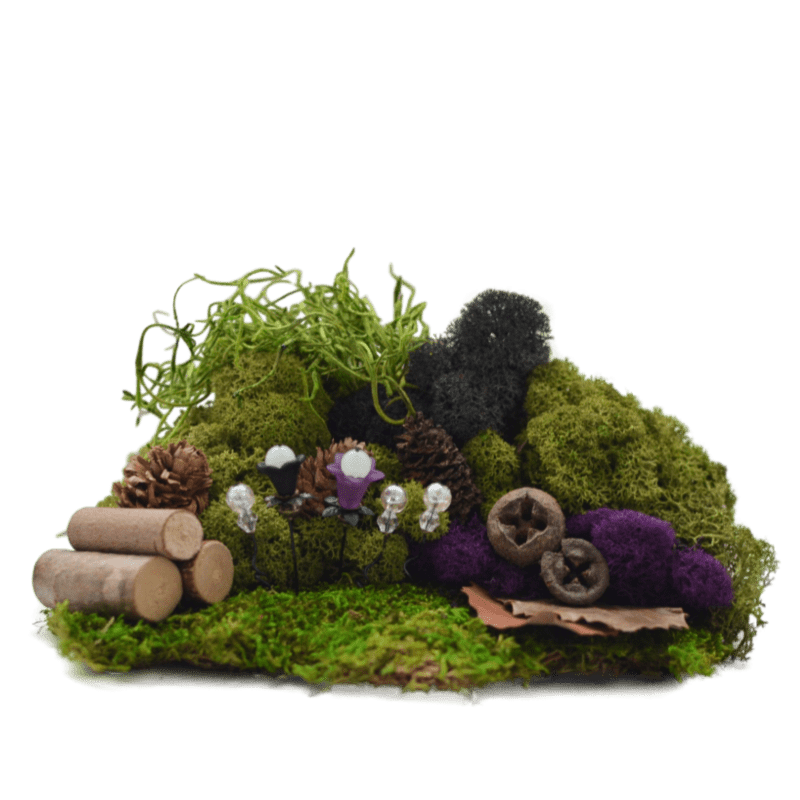 Twinkling Forest Moss Kit