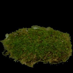 Sheet Moss – Wet Use (approx. 400cm²)