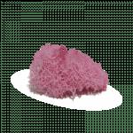 Pink Reindeer Moss