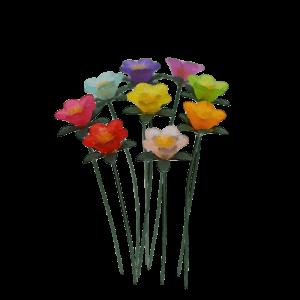 Daisies – Multicolour