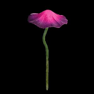 Wobble Top Mushroom – Large/Purple