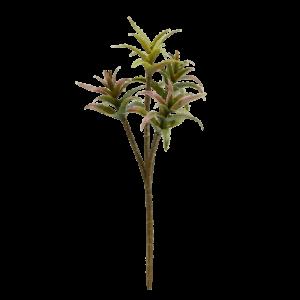 Dyckia Succulent