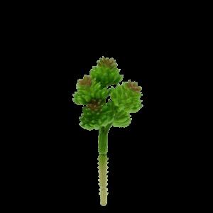Jelly Bean Succulent