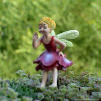 fairy belle_fga
